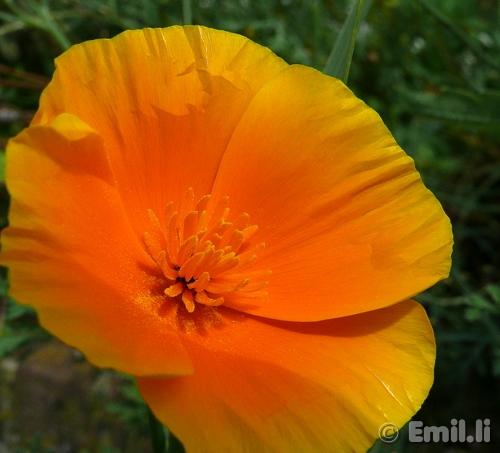 Emils Blog » Blüt