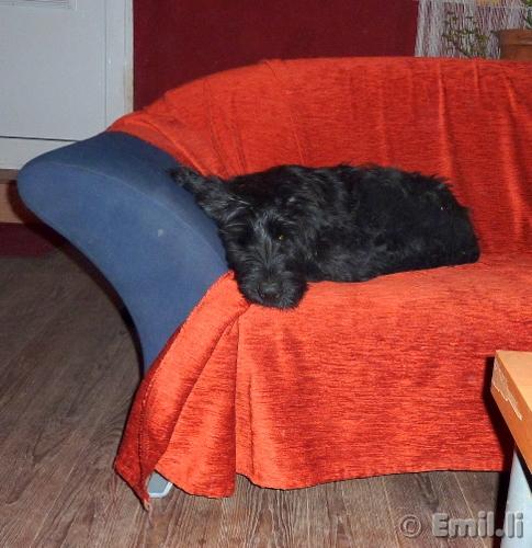 Dixie Nov2010-5